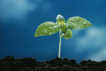 Seedling_1